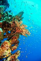 Down the reef - JCG © 2011