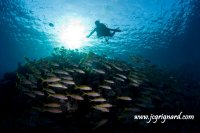 Dive is fun - JCG © 2012