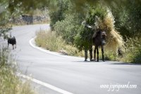 Loaded Donkey on the road...